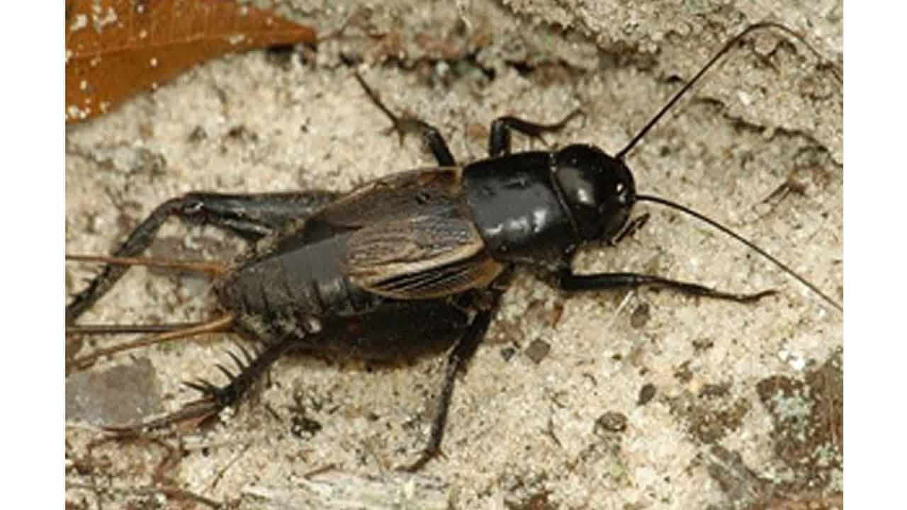 how to get rid of crickets in basement? – the housing forum