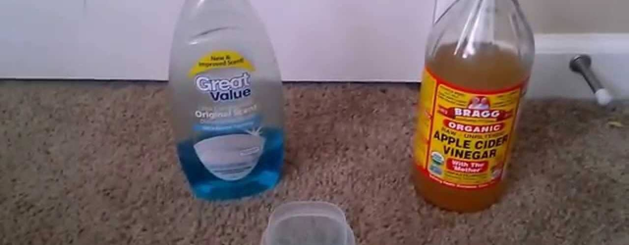 How To Get Rid Of Gnats In The Kitchen The Housing Forum