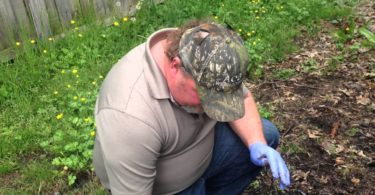 How To Get Rid Of Ground Bees? - The Housing Forum