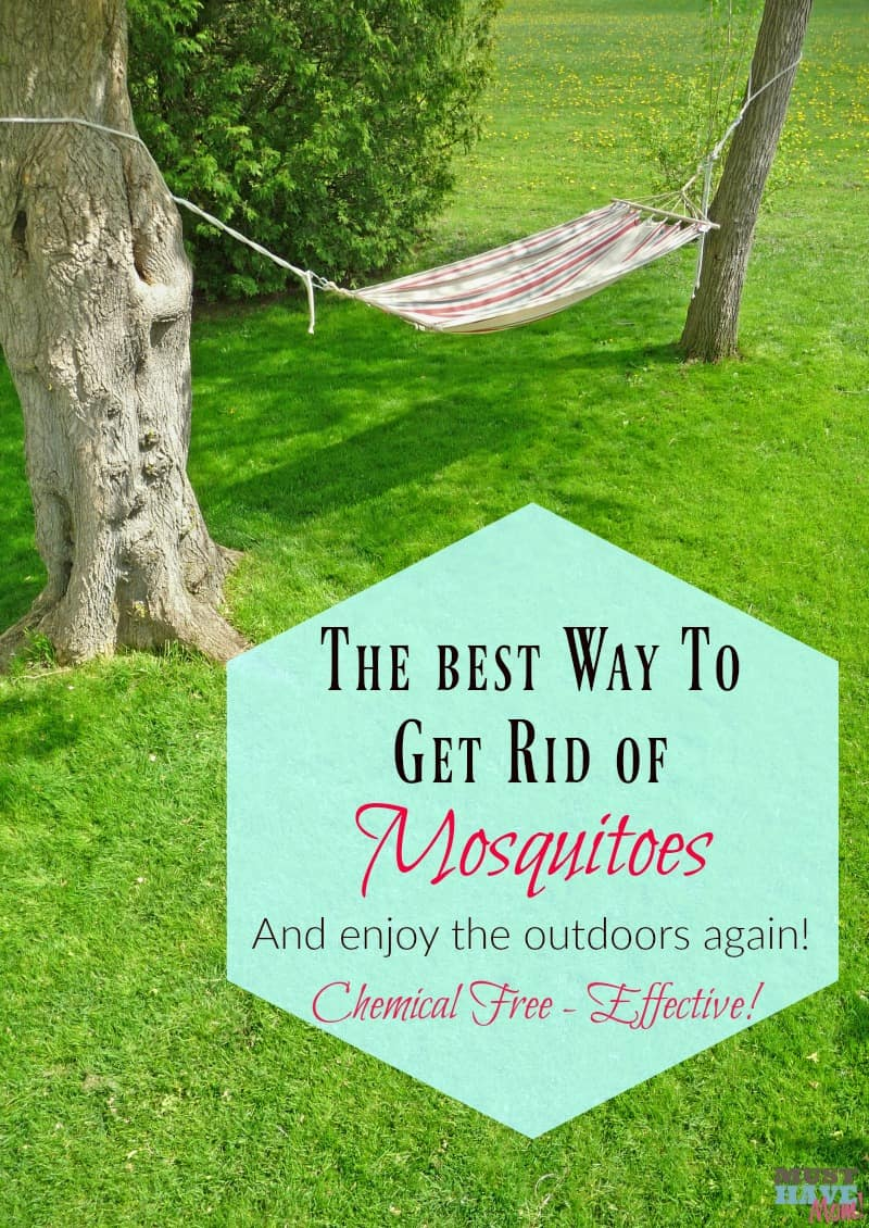 How to Get Rid of Mosquitoes in the Yard? - The Housing Forum