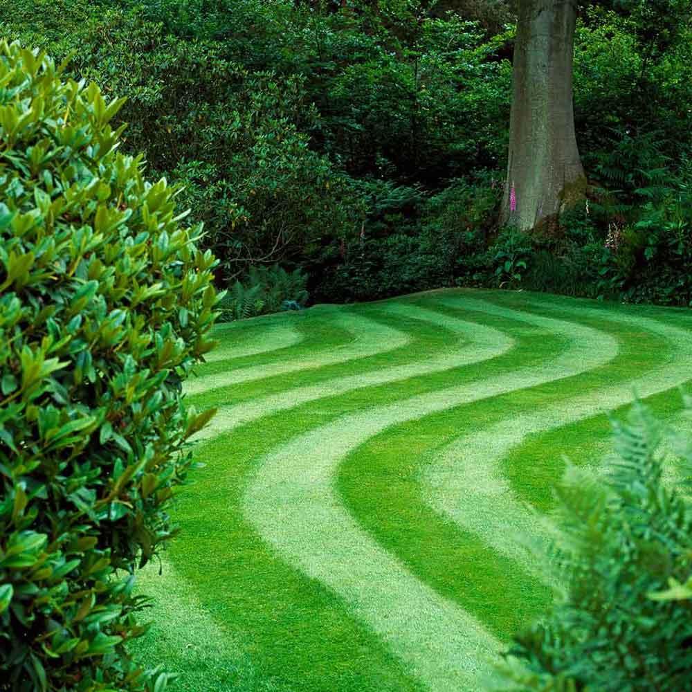 How To Grow Green Grass The Housing Forum
