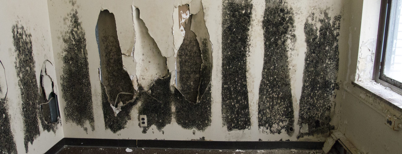 How To Test For Black Mold? – Does Mold Smell like Urine