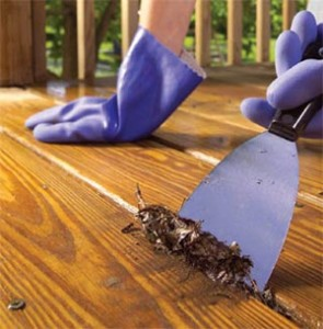Deck Painting Cleaning